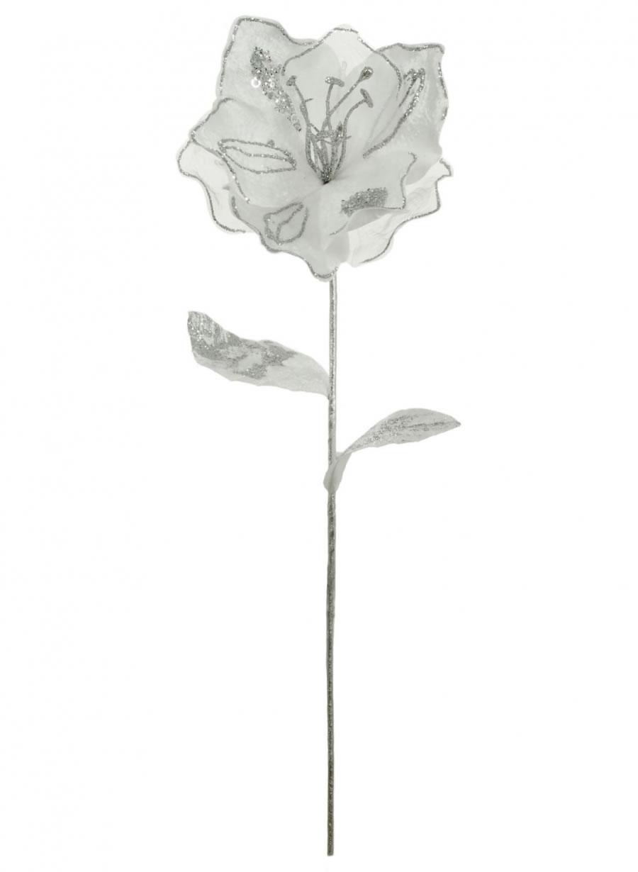 Single Fairy Magnolia