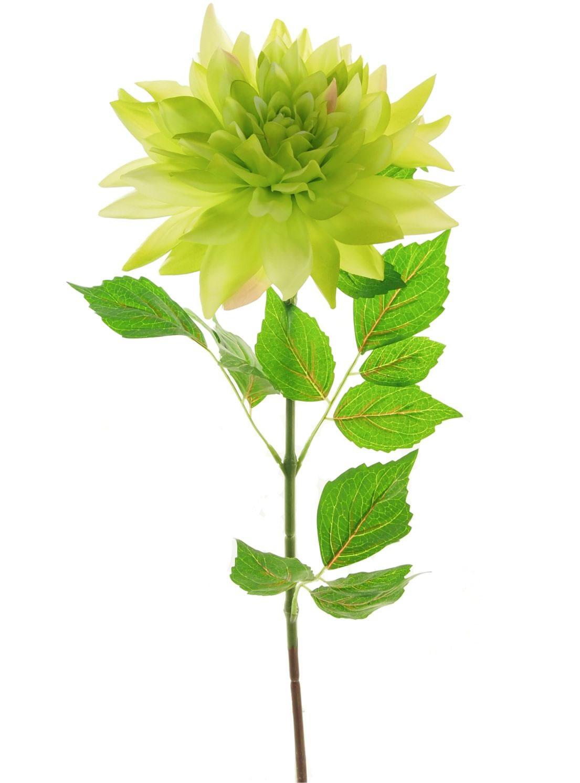 Extra Large Dahlia Lotus Imports Ltd