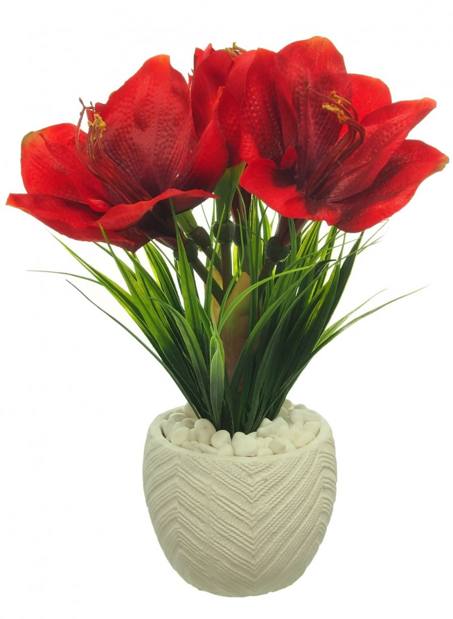 Arrangements lotus imports ltd for Pot amaryllis