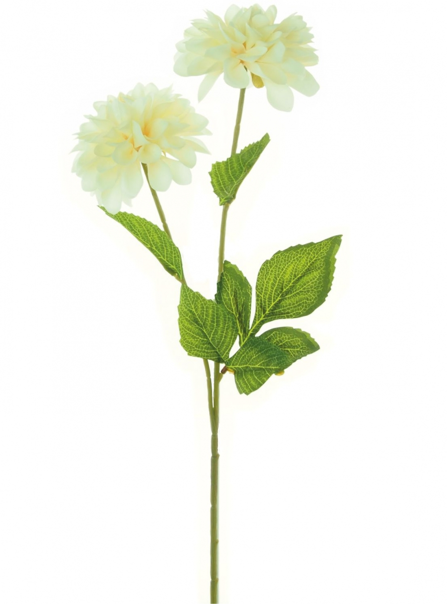 Ball Chrysanthemum