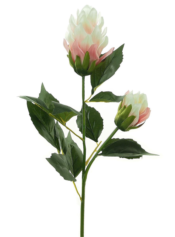 Amazon Flower - Reduced!