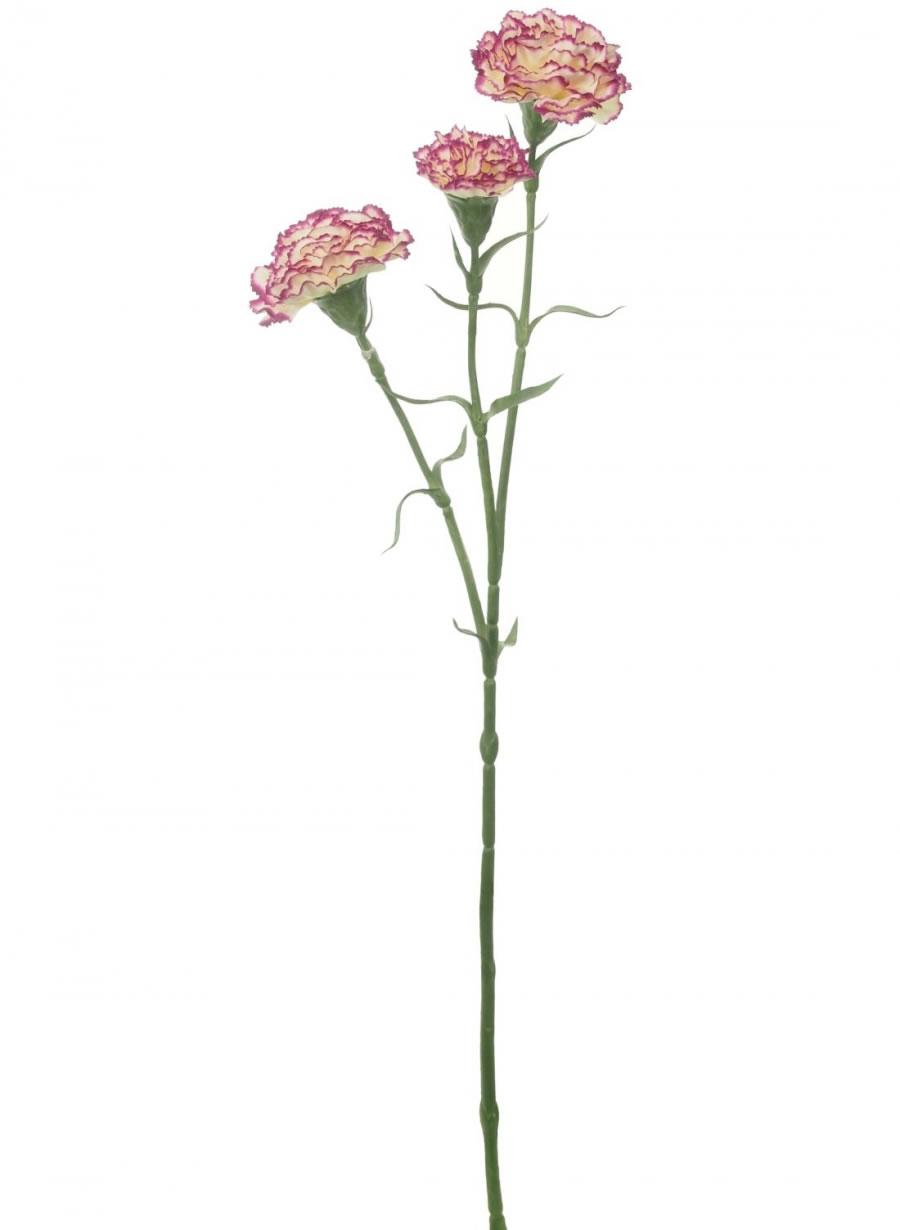 Carnation Stem