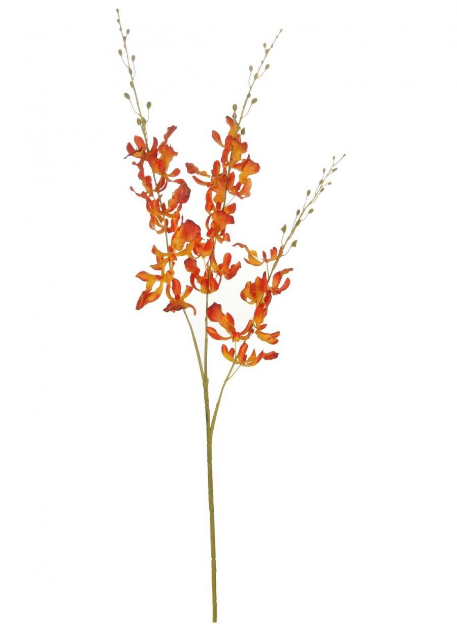 Brazilian Dancing Orchid