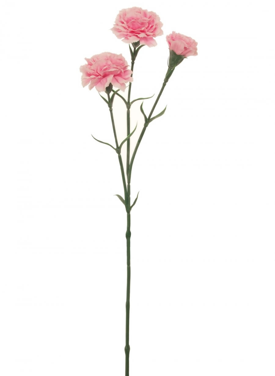 Carnation Stem Lotus Imports Ltd