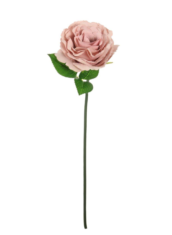 Short Stem Tudor Rose