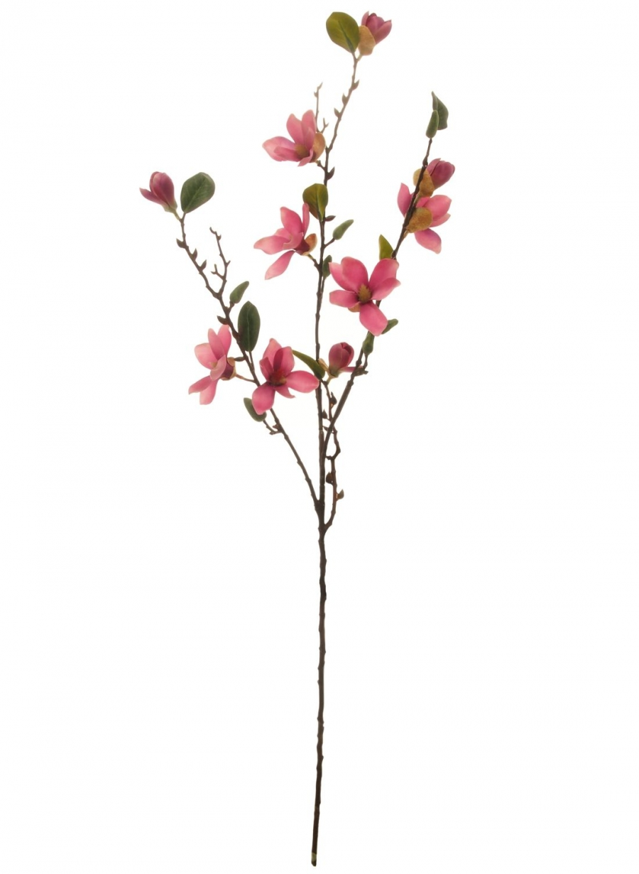Chinese Magnolia Branch