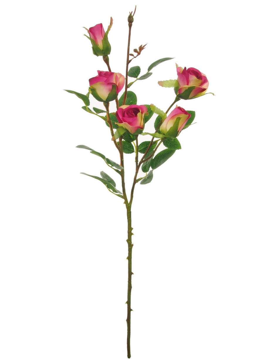 Cadence Rose
