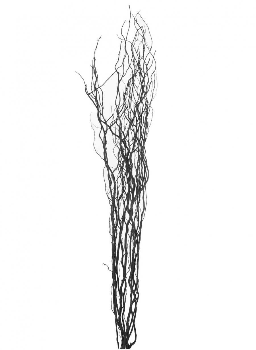 Tall Contorted Willow