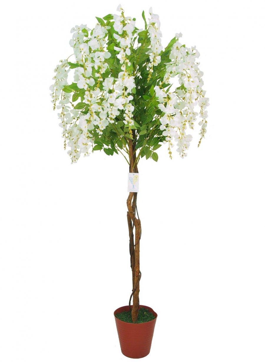 Potted Tree Wisteria Lotus Imports Ltd
