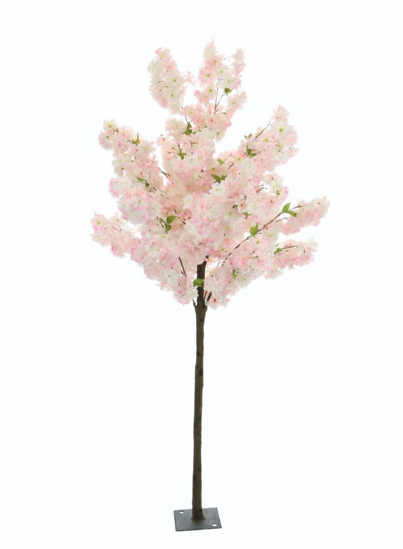 1 8m Cherry Blossom Tree Lotus Imports Ltd