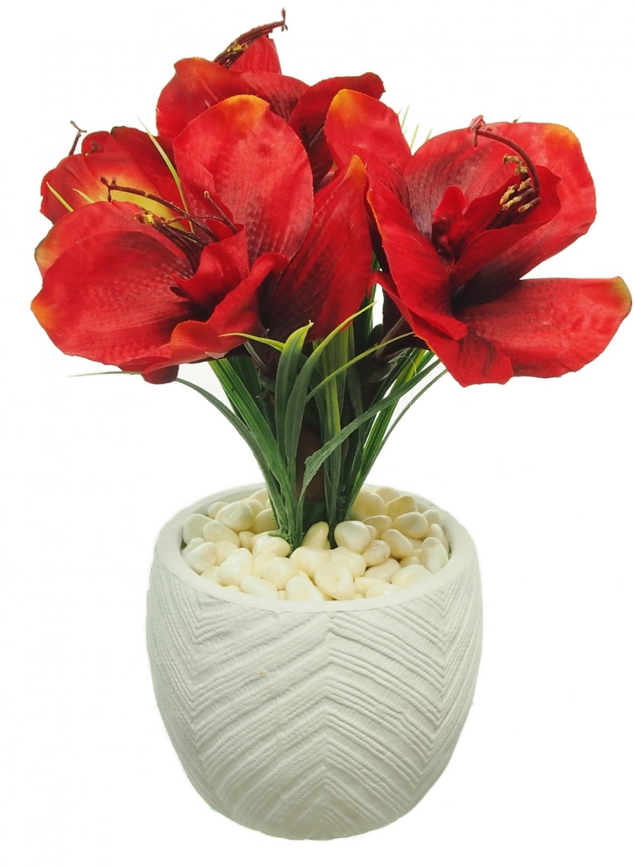 Potted amaryllis lotus imports ltd for Pot amaryllis